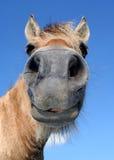 głowa konia Zdjęcia Royalty Free