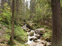 Free Górski Strumyk, W Drodze Na Homole. Stock Photography - 23167212