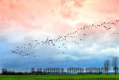 gęsia migracji Zdjęcie Royalty Free