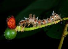 gąsienica obraz stock