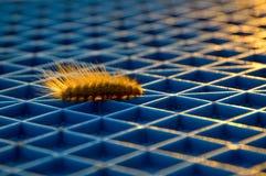 gąsienica obrazy royalty free