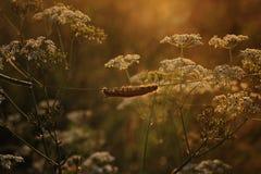 Gąsienica na trawie Zdjęcia Royalty Free