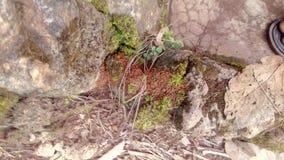 Gąsienicowa kolonia Fotografia Royalty Free