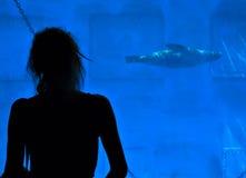 G-sjölejon i Barcelonas zoo Royaltyfri Fotografi