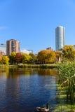 Gąska na jeziorze przy Loring parkiem, Minneapolis, Minnestoa Zdjęcie Royalty Free