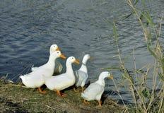 Gąska na riverbank Zdjęcia Stock