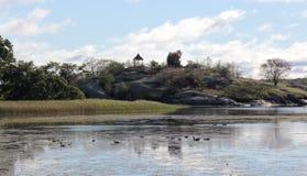 Gąski i kaczki karmi na St Lawrance rzece Fotografia Stock