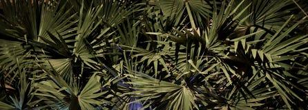 G?sty palmowy ulistnienie, nighttime, rostowy t?o obrazy royalty free