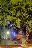 G?sty palmowy ulistnienie, nighttime, rostowy t?o obraz royalty free