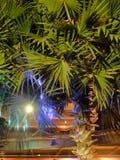 G?sty palmowy ulistnienie, nighttime, rostowy t?o zdjęcia stock
