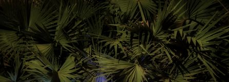 G?sty palmowy ulistnienie, nighttime, rostowy t?o fotografia stock