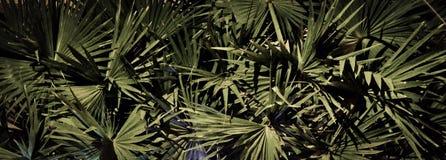 G?sty palmowy ulistnienie, nighttime, rostowy t?o obrazy stock