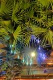 G?sty palmowy ulistnienie, nighttime, rostowy t?o zdjęcia royalty free