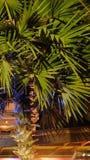 G?sty palmowy ulistnienie, nighttime, rostowy t?o fotografia royalty free