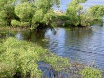Gąszcze na brzeg rzeki Zdjęcie Royalty Free