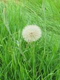 G0-to bed-at noon. Go-to bed-at noon among grass in summer time royalty free stock photos