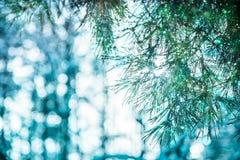 Gałąź bożego narodzenia treewith piękny bokeh zdjęcie royalty free