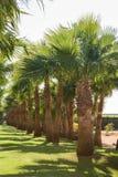 Gałąź daktylowe palmy pod niebieskim niebem w Egipt zdjęcie stock