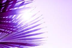 Gałąź tonować w protonowych purpurach drzewko palmowe barwią obraz stock