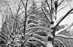 gałąź zakrywający śnieżny drzewo obraz stock