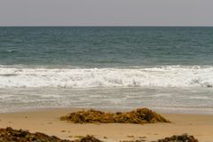 Gałęzatka i flotsam myliśmy w górę piaskowatej plaży dalej zdjęcia stock
