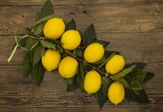 Gałąź świeże soczyste Sycylijskie cytryny na drewnianym tle Obraz Stock