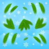 Gałąź świerczyna na zimy tle Elementy dla robią Chris Fotografia Stock