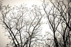 Gałąź żadny liście czarny i biały Susi nieżywi drzewa odizolowywają białego tło Obraz Stock