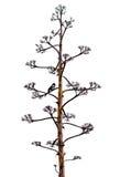 Gałąź agawa ptak i kwiat Zdjęcia Royalty Free