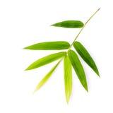 Gałąź bambusów liście odizolowywający na białym tle botaniczny Zdjęcia Stock