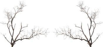 Gałąź bez liścia odizolowywającego na bielu Fotografia Stock