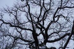 Gałąź chmur zima Obraz Royalty Free