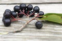 Gałąź chokeberry na drewnianym stole Zdjęcie Stock