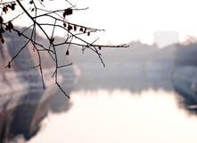 Gałąź Czereśniowy Czereśniowy okwitnięcie z jeziorem zdjęcia royalty free