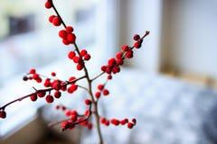 Gałąź czerwony halny popiół Zdjęcie Stock