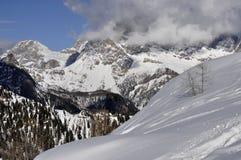 gałąź dolomitów skłon śnieżny obrazy royalty free