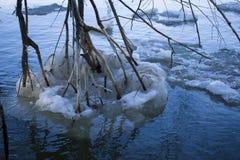 Gałąź dotkliwością lód i śnieg zdjęcia stock