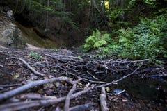Gałąź, drewna na rzece Obrazy Royalty Free