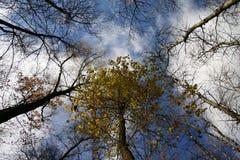 Gałąź drzewa Fotografia Stock