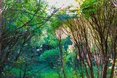 Gałąź drzewa i krzaki w lesie zdjęcia royalty free