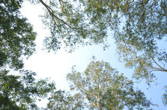Gałąź drzewa i niebo Zdjęcia Stock
