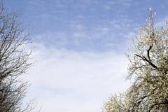Gałąź drzewa przeciw niebieskiemu niebu Piękny zieleń park na nieba tle Zdjęcie Royalty Free