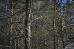 Gałąź drzewa w lesie fotografia stock