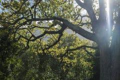Gałąź drzewa z światłem Zdjęcia Stock