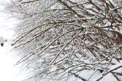 Gałąź drzewa zakrywający z śniegiem Zdjęcia Stock