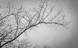 Gałąź drzewo Fotografia Royalty Free