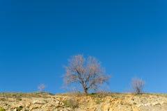 gałąź drzewo przeciw niebieskiemu niebu Zdjęcia Royalty Free