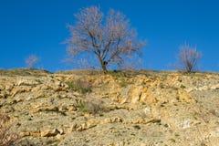 gałąź drzewo przeciw niebieskiemu niebu Fotografia Royalty Free