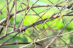 Gałąź drzewo przeciw zielonemu tłu Obraz Stock