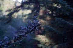 Gałąź drzewo w lesie fotografia stock
